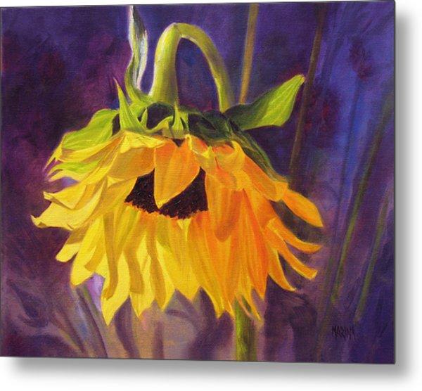 Sunflower Glow Metal Print by Marina Petro
