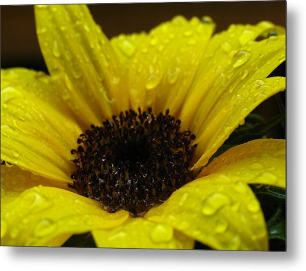 Sunflower Macro Metal Print by Juergen Roth