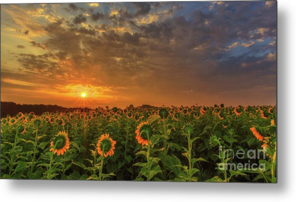 Sunflower Peak Metal Print
