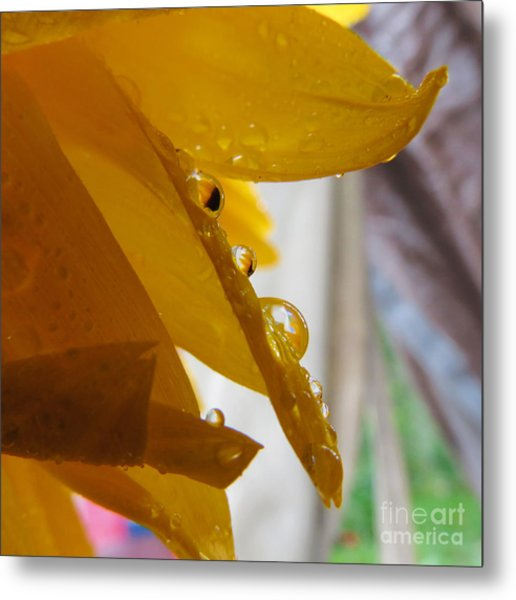 Sunflower Series II Metal Print