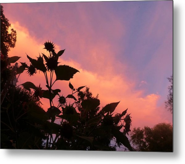 Sunset In Chatfield Metal Print