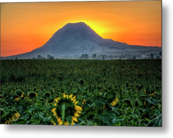 Sunflower Sunrise Metal Print