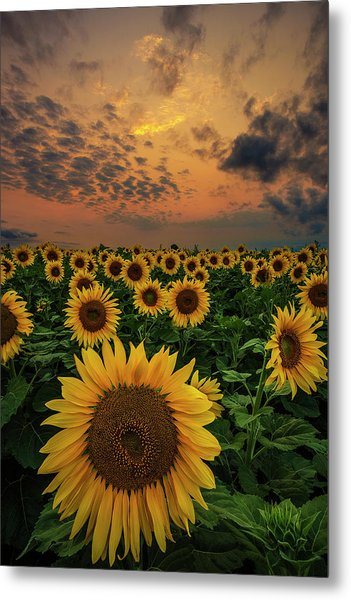 Metal Print featuring the photograph Sunflower Sunset  by Aaron J Groen