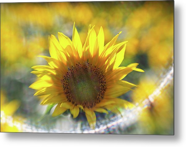 Sunflower With Lens Flare Metal Print
