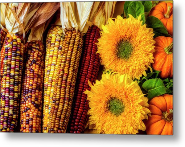 Sunflowers And Indian Corn Metal Print