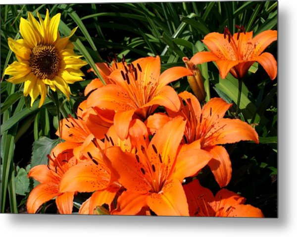 Sunflowers And Lillies Metal Print