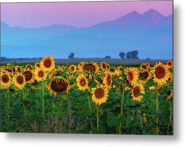 Sunflowers At Dawn Metal Print
