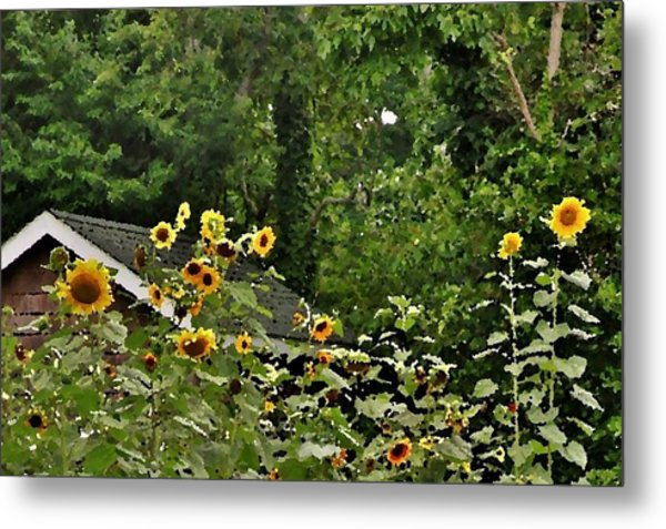 Sunflowers At The Good Earth Market Metal Print