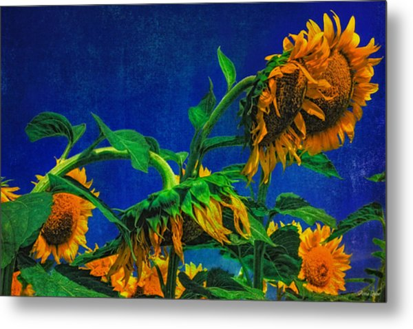 Sunflowers Awakening Metal Print