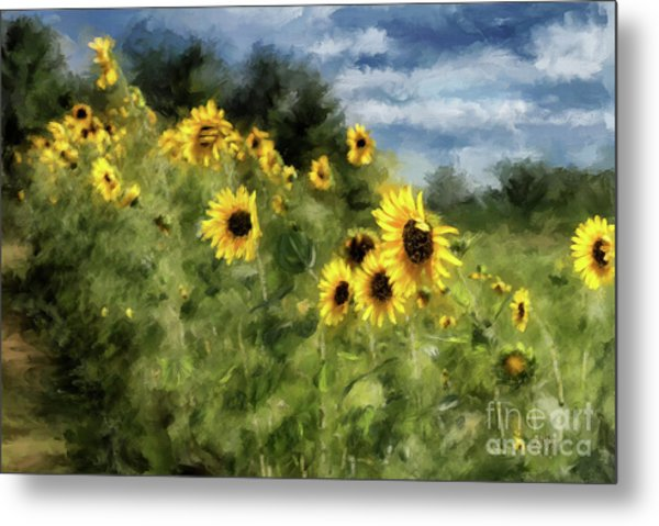 Sunflowers Bowing And Waving Metal Print