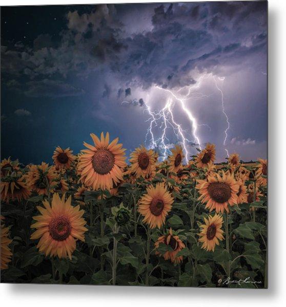 Sunflowers In Adversity Metal Print by Brent Shavnore
