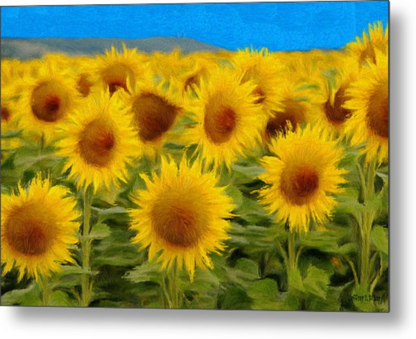 Sunflowers In The Field Metal Print
