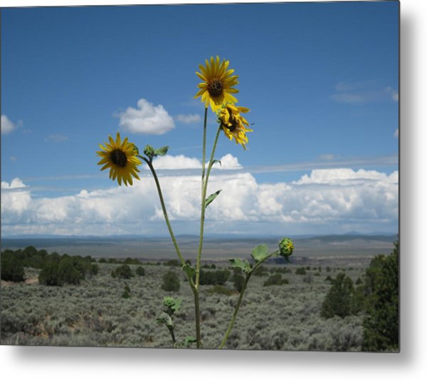 Sunflowers On The Gorge Metal Print