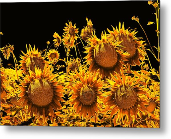 Sunflowers Up Front And Personal Metal Print