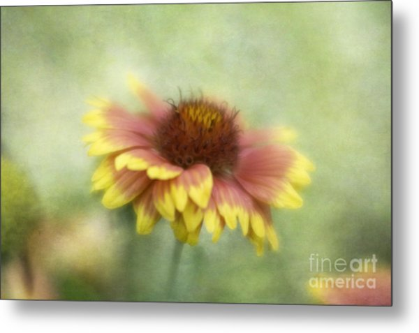 Sunkissed Metal Print by Cindy McDonald