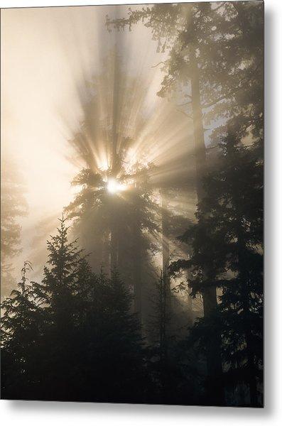 Sunlight And Fog Metal Print