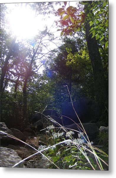 Sunlight On Forest Ground Metal Print by Alison Heckard
