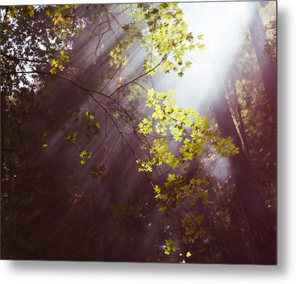 Sunlit Beauty Metal Print