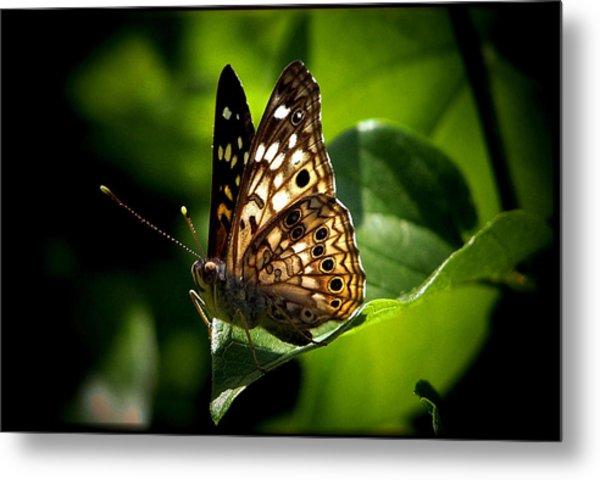 Sunlit Butterfly Metal Print by Karen Scovill