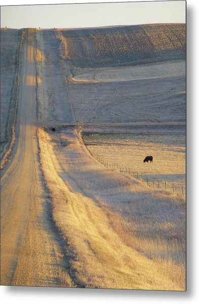 Sunlit Road Metal Print