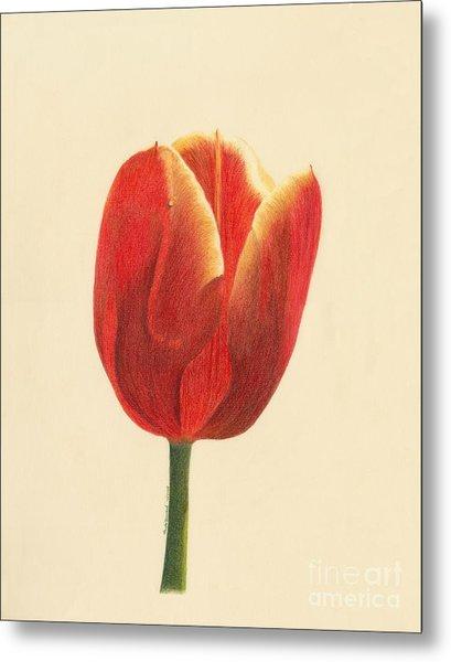 Sunlit Tulip Metal Print