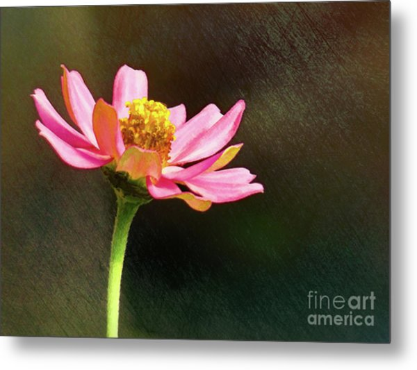Sunlit Uplifting Beauty Metal Print
