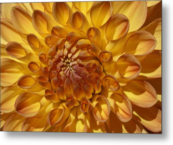 Sunny Delight Metal Print by Monnie Ryan