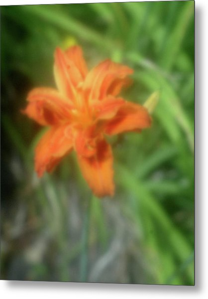 Sunny Orange Metal Print
