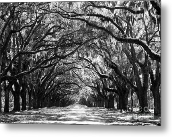 Sunny Southern Day - Black And White Metal Print