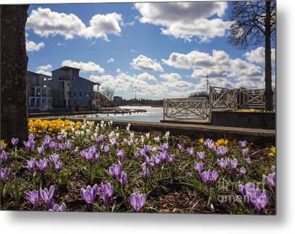 Sunny Spring Flowers In Helsinki Metal Print