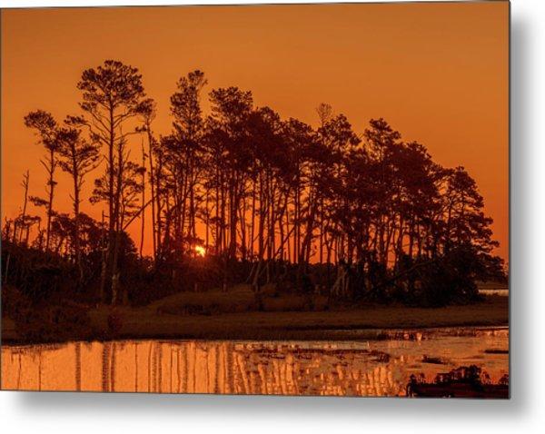 Sunrise Along A Tree Line Metal Print