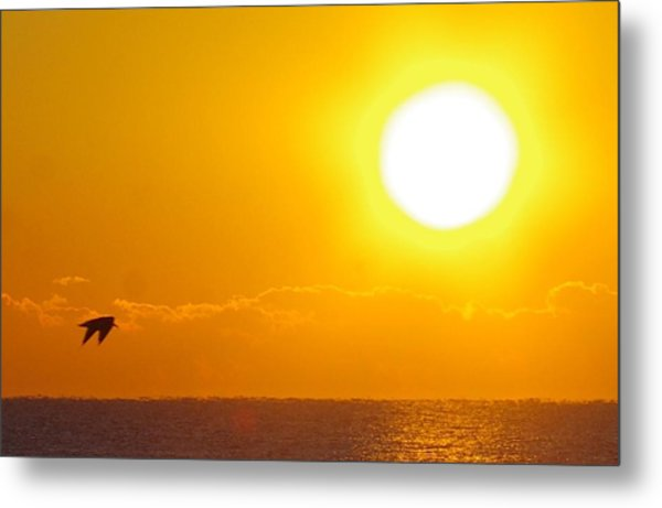 Sunrise And Bird Metal Print