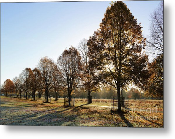 Sunrise And Long Shadows Metal Print