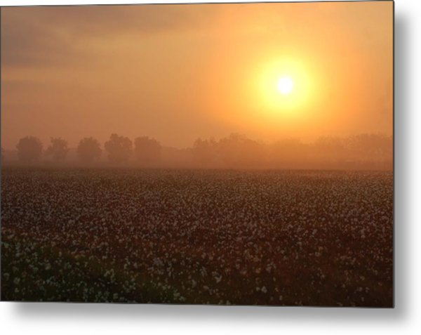 Sunrise And The Cotton Field Metal Print