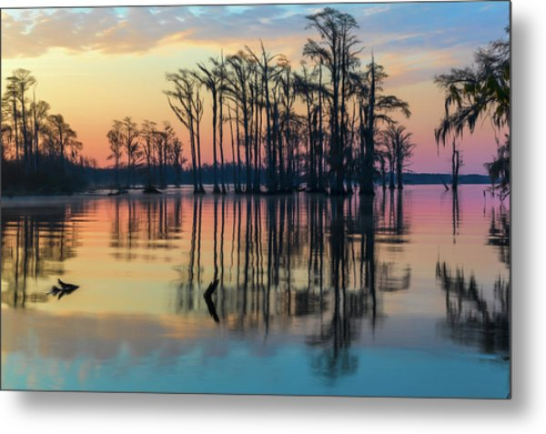Sunrise, Bald Cypress Of Nc  Metal Print