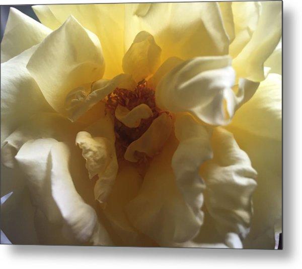 Sunrise Flower Metal Print