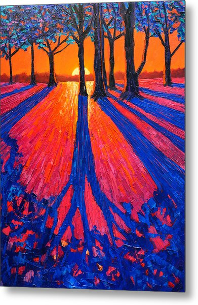 Sunrise In Glory - Long Shadows Of Trees At Dawn Metal Print