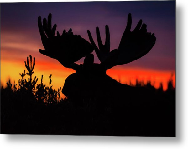 Sunrise King Metal Print