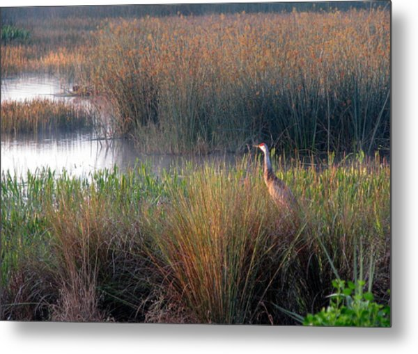 Sunrise On The Wetlands Metal Print