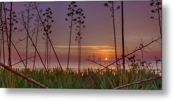 Sunrise Palm Blooms Metal Print
