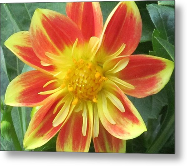 Sunrise Petals Metal Print