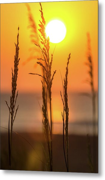 Sunrise Serenity Metal Print by AM Photography