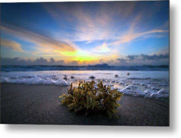 Sunrise Shoreline Metal Print