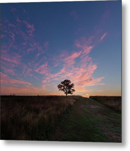 Sunrise Tree 2016 Square Metal Print