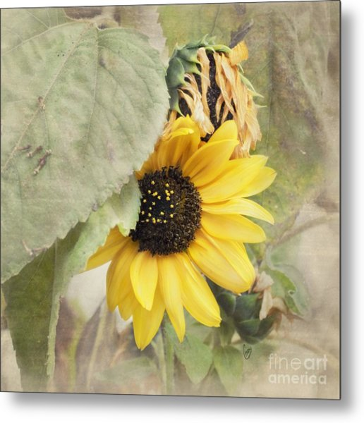 Last Sunflower Metal Print