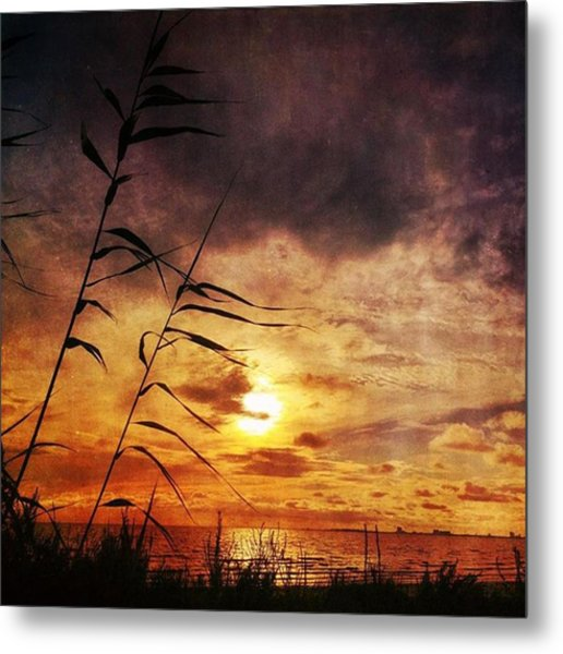 Sunset Among The Reeds #sunset Metal Print