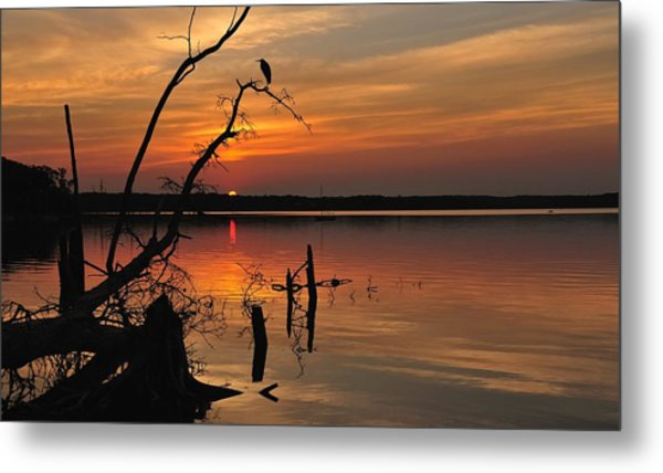 Metal Print featuring the photograph Sunset And Heron by Angel Cher