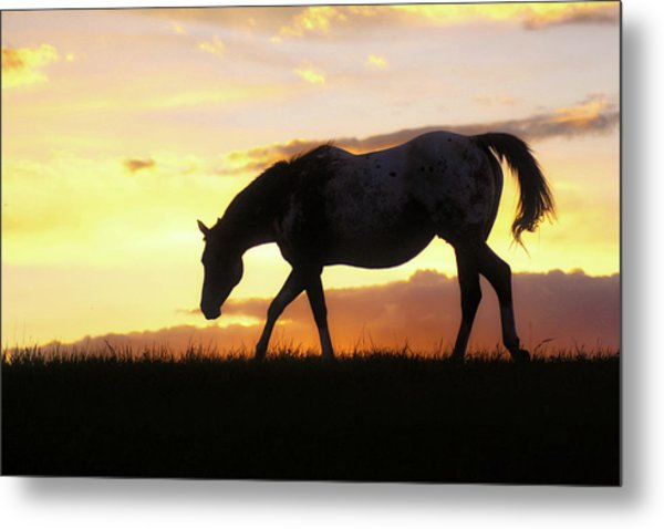 Sunset Appy Metal Print