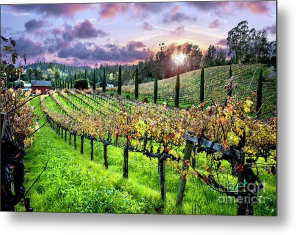 Sunset At The Palmers Metal Print