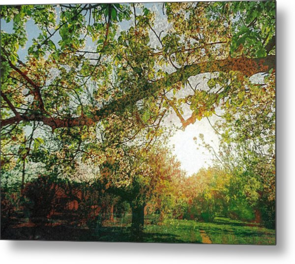 Metal Print featuring the photograph Sunset  by Bee-Bee Deigner